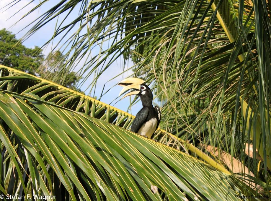 Hornbill-sb.jpg