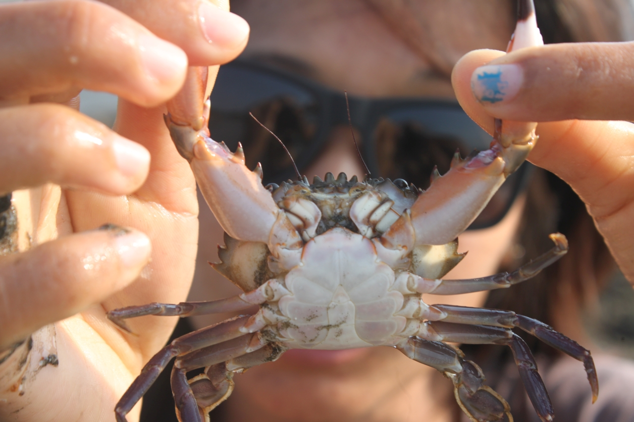 crab-s.jpg