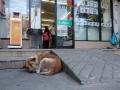 7-11-dog-gallery