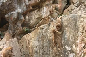 Spielende Affen
