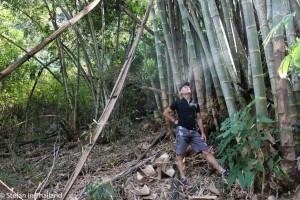 Bambushain-sb