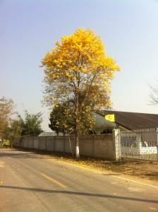 wunderschöne Blütenpracht sogar am Baum
